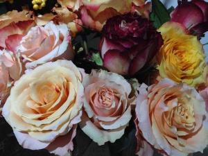 roses-210021_640