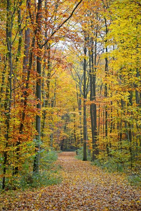 autumn-1013015_960_720