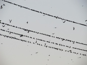 birds-385310_960_720