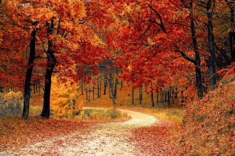 fall-1072821_960_720