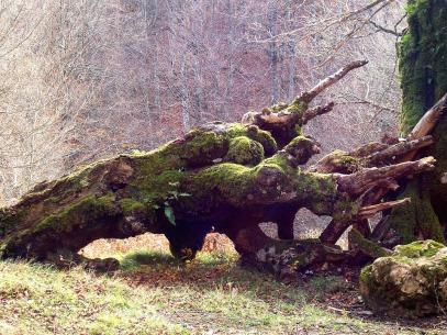 tree-264726_960_720