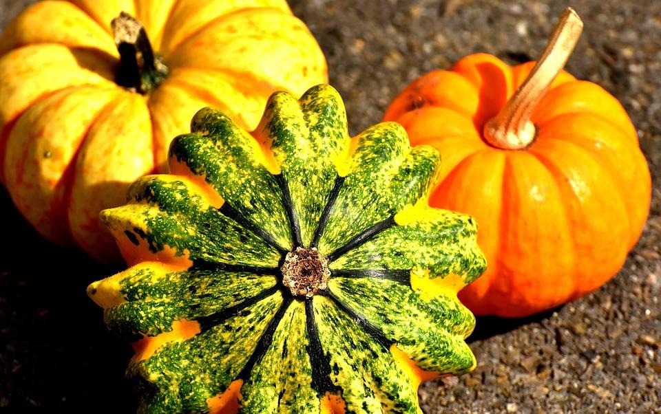 pumpkins-2204643_960_720