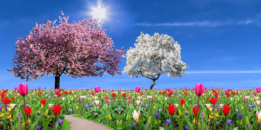 nature-landscape-garden-spring