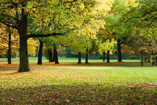 autumn-park-157434108-5948060c5f9b58d58abb17fe